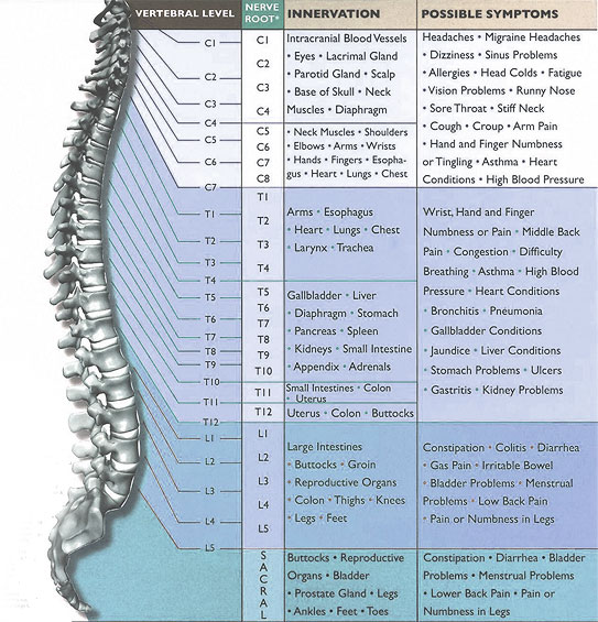Image result for chiro spine issues